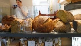 """Rep :   Gli artigiani del lievito madre: """"Noi prestin trasmettiamo ai giovani l'amore per il pane""""       di SIMONE MOSCA"""