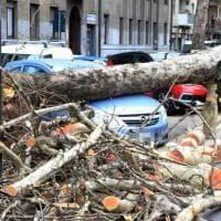 Forte vento su Milano, albero crolla in corso Sempione su un'auto parcheggiata