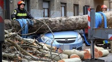 Foto  Forte vento in città, albero crolla in corso Sempione su un'auto parcheggiata