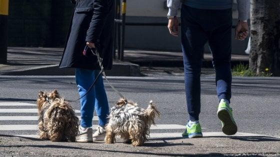 """Coronavirus, le domande ai veterinari: """"Dottore, il mio cane può essere contagiato e trasmettere il virus?"""""""