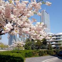 La primavera riempie di colore Milano: i fiori diventano padroni della città svuotata dal coronavirus