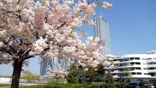 La primavera riempie di colore Milano: i fiori diventano padroni della città svuotata