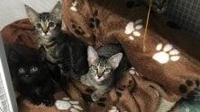 """Polizia locale multa i volontari del gattile: """"Troppi"""". Mail bombing contro il Comune"""