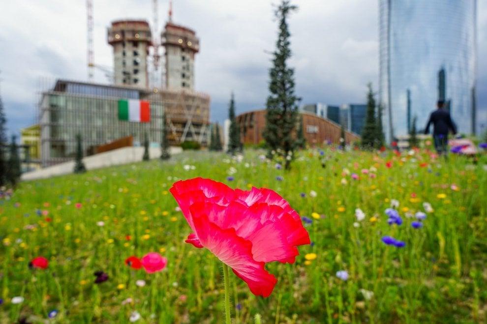 La primavera sboccia al parco della Biblioteca degli Alberi a Milano