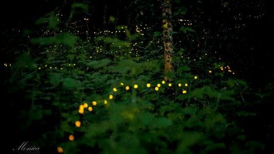 """Tornano le lucciole al Parco delle Cave: sì alla """"lusiroeula"""" ma non in gruppo per le norme anticontagio"""