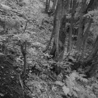 Nei boschi dell'alto Garda spunta una lince, immortalata dalla fototrappola