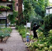 L'Orto botanico di Brera riapre al pubblico: un mese di passeggiate tra i fiori e le piante medicinali