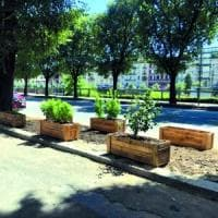 L'informatico che a Milano salva le piante in strada: