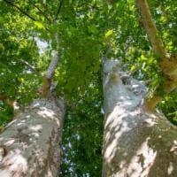 La sfida verde di Milano: venti parchi e tre milioni di piante entro il