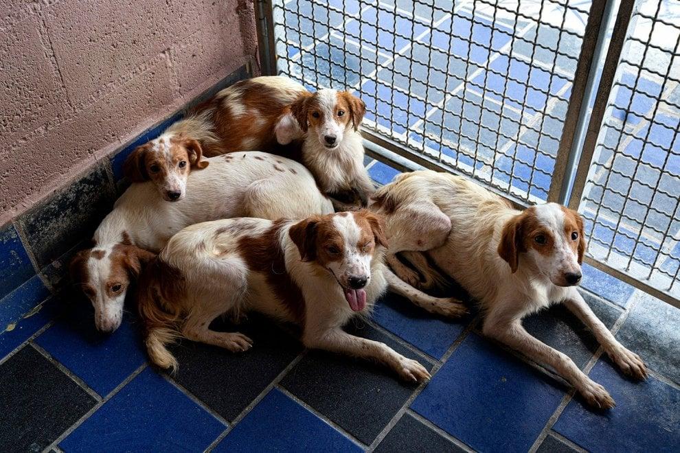 Trentotto cani segregati per anni in una stanza buia, ora aspettano di essere adottati