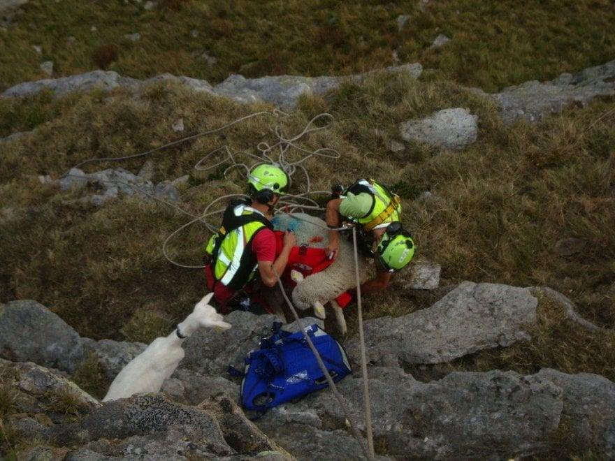 Salvataggio ad alta quota: capra e pecora recuperate in elicottero e riportate dal gregge
