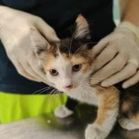 """""""C'è un gattino nel motore"""", l'allarme da un'auto in sosta in zona Bocconi: i passanti e l'Enpa lo salvano"""