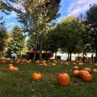 Il villaggio delle zucche a San Martino Siccomario: nel Pavese il parco tematico che celebra l'autunno