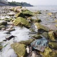 """Mascherine abbandonate nel lago di Garda, l'allarme del Wwf: """"Inquinano come la plastica"""""""