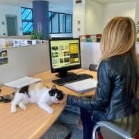 Rozzano, il Comune apre gli uffici agli animali domestici: fra pc e scrivanie