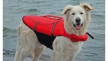 """Giubbotti """"salva cane""""  sugli aliscafi per le isole"""
