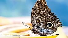 Ipomea del Negombo, fiori, piante e farfalle