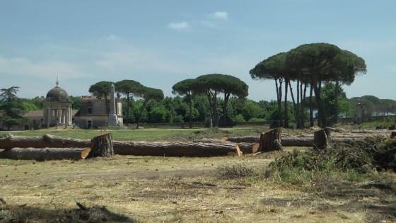 La sovrintendenza taglia i pini nel real sito di for Sito la repubblica