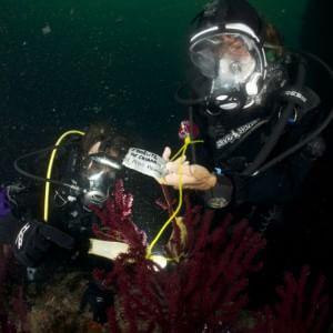 Un progetto per salvare gli squaletti nel Golfo