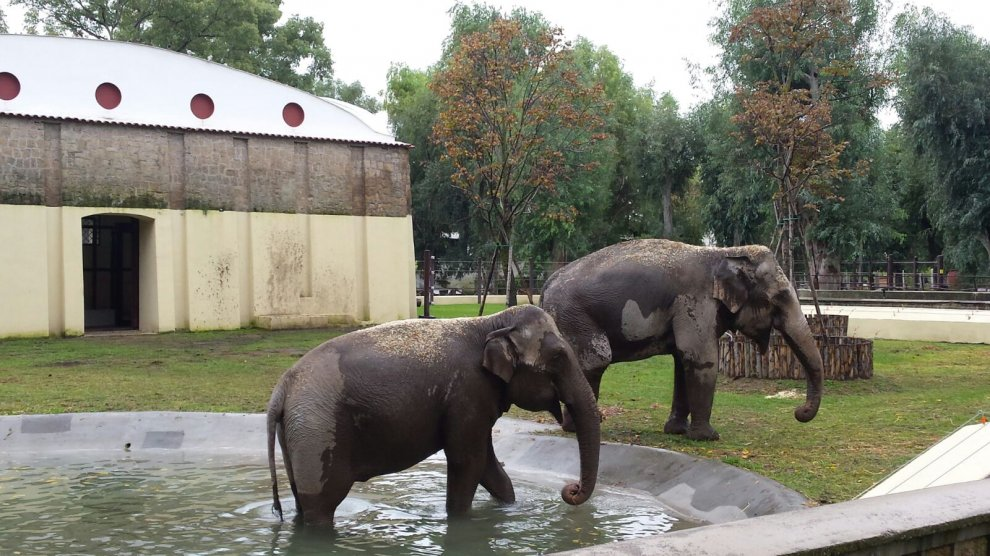 Le elefantesse Wini e Jula hanno una nuova casa allo Zoo di Napoli