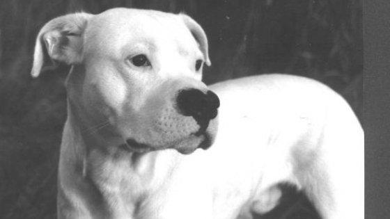 Amalfi, il cane è aggressivo?  Rieducazione per lui e per il padrone