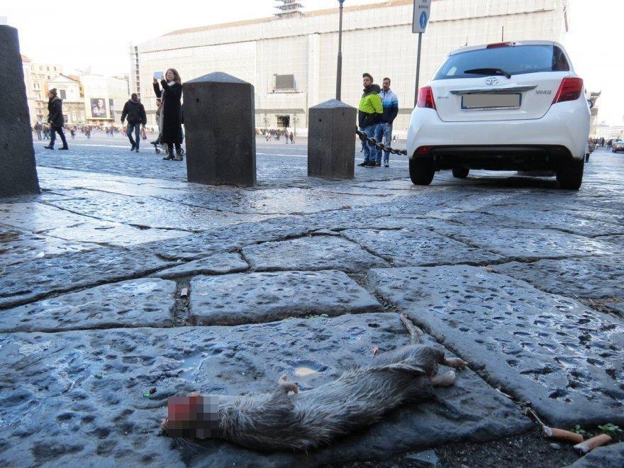 Topi e rifiuti a ridosso di piazza Plebiscito