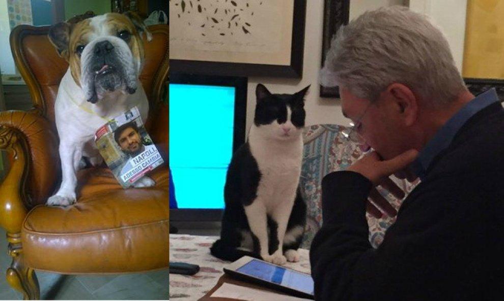 Primarie Pd, ecco gli spin doctor: gatto, cane e bottiglia di plastica