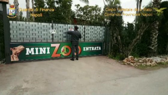 Sequestrato a Saviano zoo abusivo con tartarughe e dromedari (video)