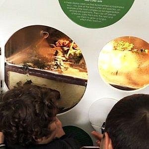 Il Museo del Suolo, viaggio nel mondo invisibile sotto i nostri piedi