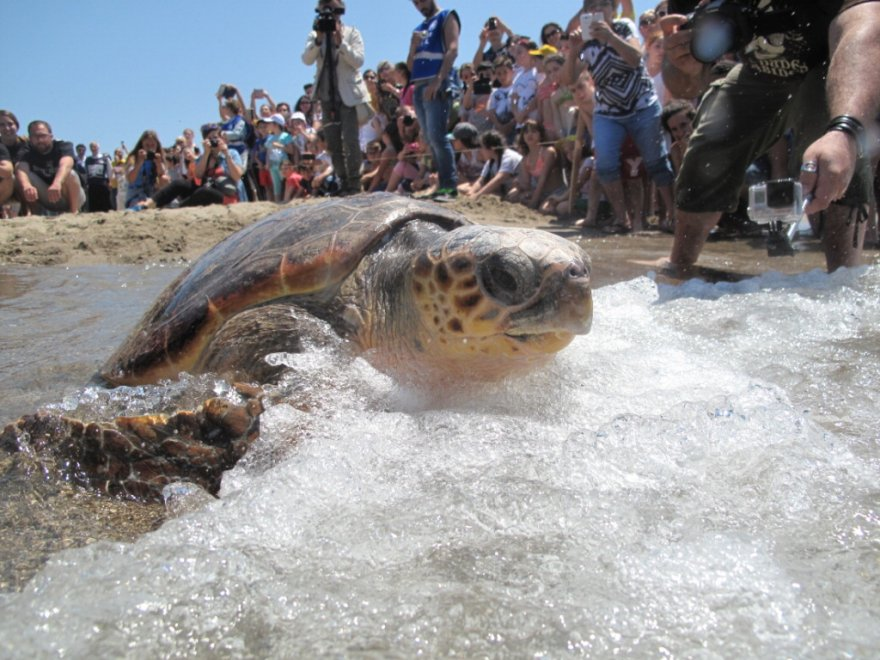 Festa a Battipaglia: le tartarughe Omero, Babason, Alessandra e Gonzala tornano in mare