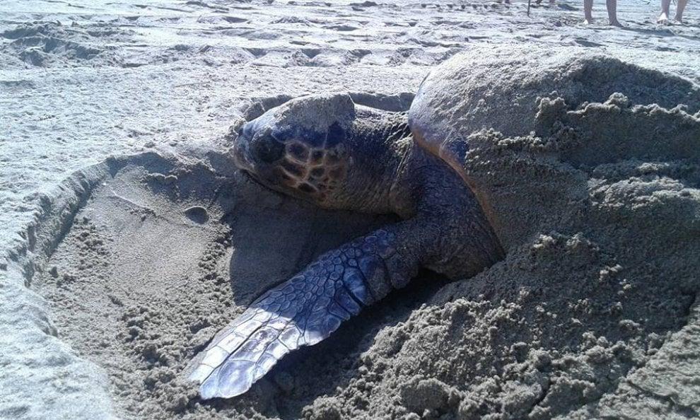 Spettacolo della natura a pollica il primo nido di for Luci per tartarughe
