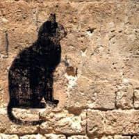 Il libro: Acchiappalagatta, un viaggio tra Salento e Napoli