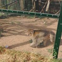 La seconda vita di Maya, la scimmia sequestrata  a San Marzano sul Sarno