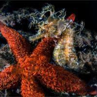 Baia, il cavalluccio e la stella marina