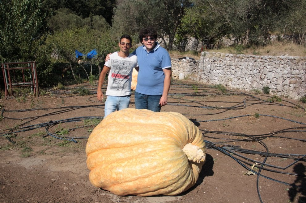 Capri, ecco la zucca dei record: pesa 605 chili