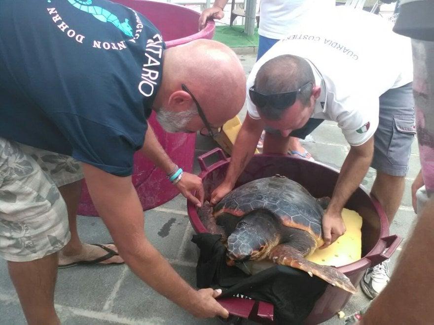 Cilento, i pescatori salvano Carla, la Caretta caretta investita da una barca