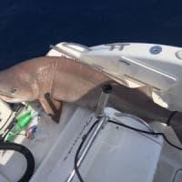 Napoli, che sorpresa: uno squalo a Mergellina