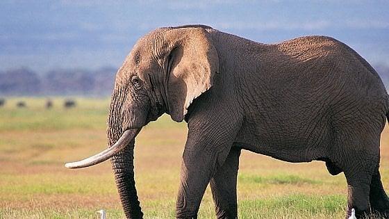 No al selfie con l'elefante