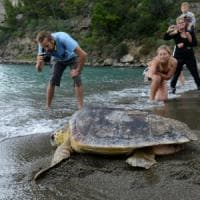 Ischia saluta Carla e Agata Christie: dieci tartarughe marine tornano in