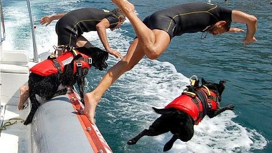 Salva un uomo in mare con il suo labrador, premiati entrambi
