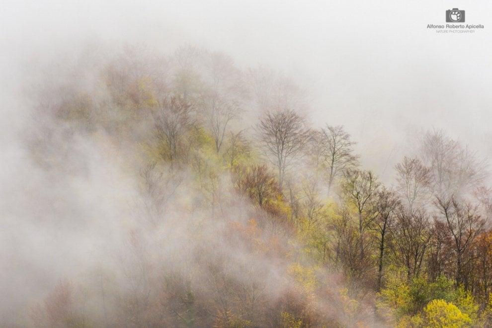 Irpinia, lo spettacolo del foliage