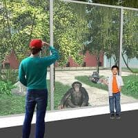 Zoo, crowdfunding per l'area scimpanzè: