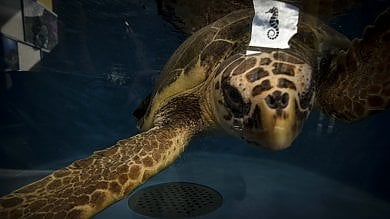 Portici, inaugurato il nuovo Centro ricerche tartarughe marine  foto