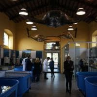La seconda vita delle tartarughe: a Portici nasce l'ospedale-nursery delle