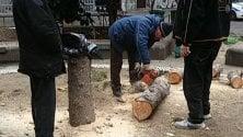 Il cedro decapitato  dai barbari     Un'assemblea  per ripiantare il cedro