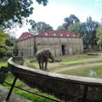 Se uno zoo salva i bambini perduti