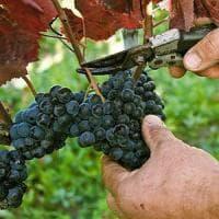 Il consorzio vini d'Irpinia verso il riconoscimento del ministero