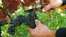 Il consorzio vini d'Irpinia  riconosciuti dal ministero
