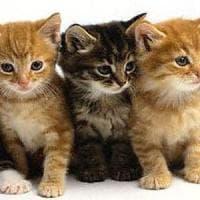 Giornata del gatto, un personaggio di rispetto