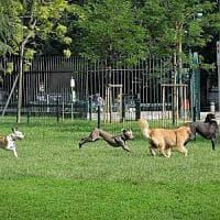 Corteo a Salerno per una cagnolina massacrata